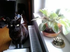 Peco a 18 éves macskám, 2014