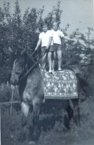 Sári lovon, Lukácsfalva, 1960